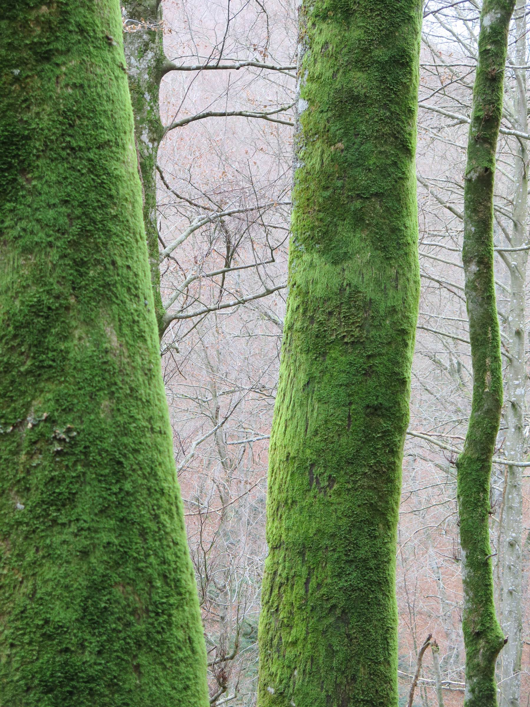 Trees and moss. Image by Martin Ázua