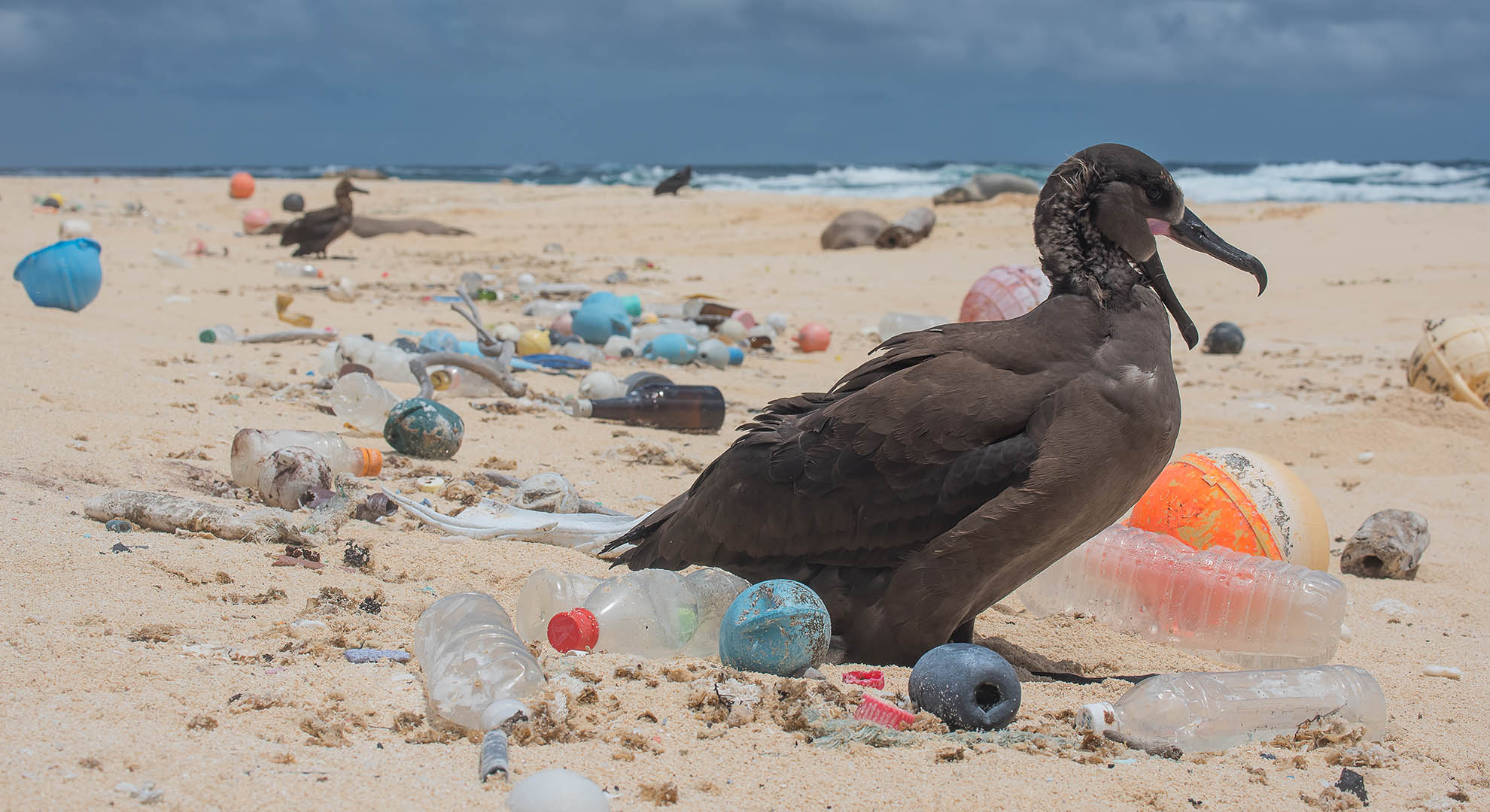Bird in a garbage island