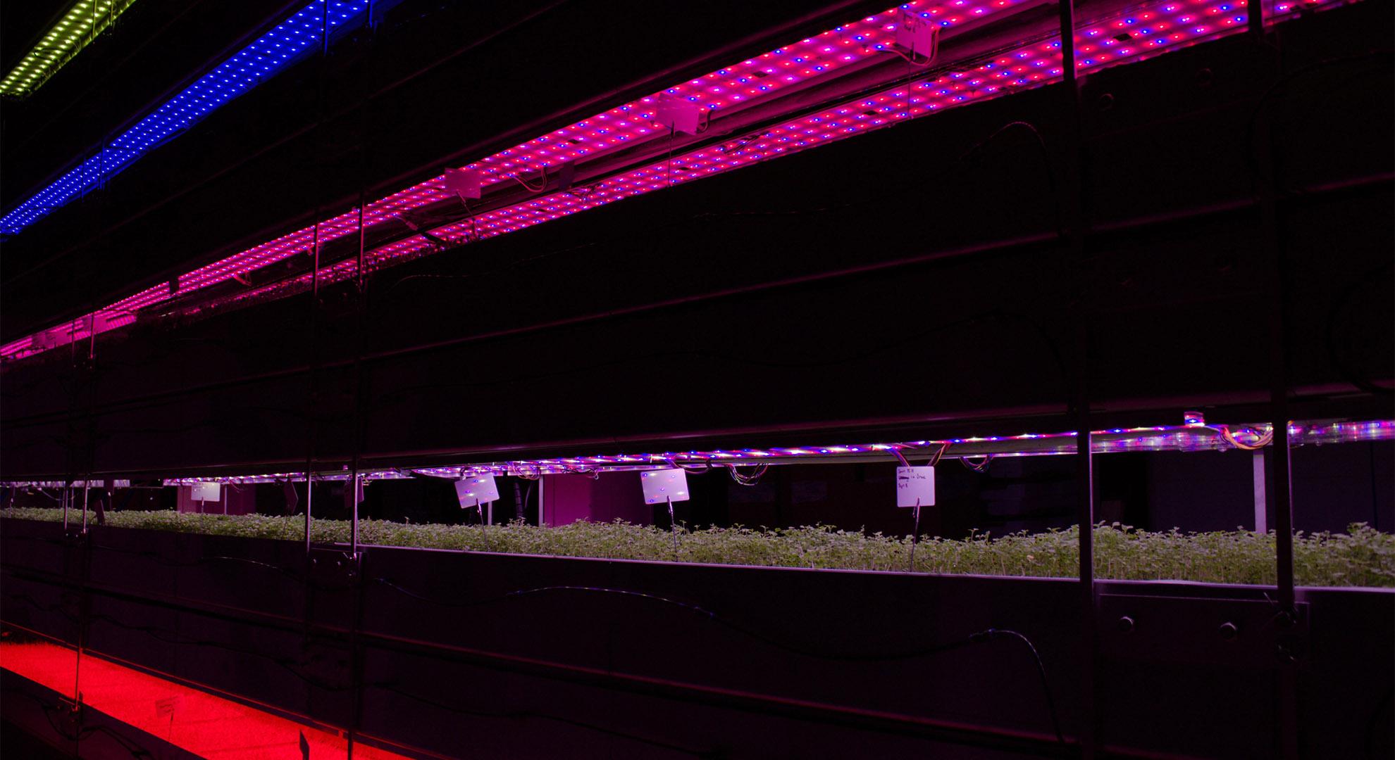 Sistema de cultivo que ofrece posibilidades alternativas en agricultura urbana.