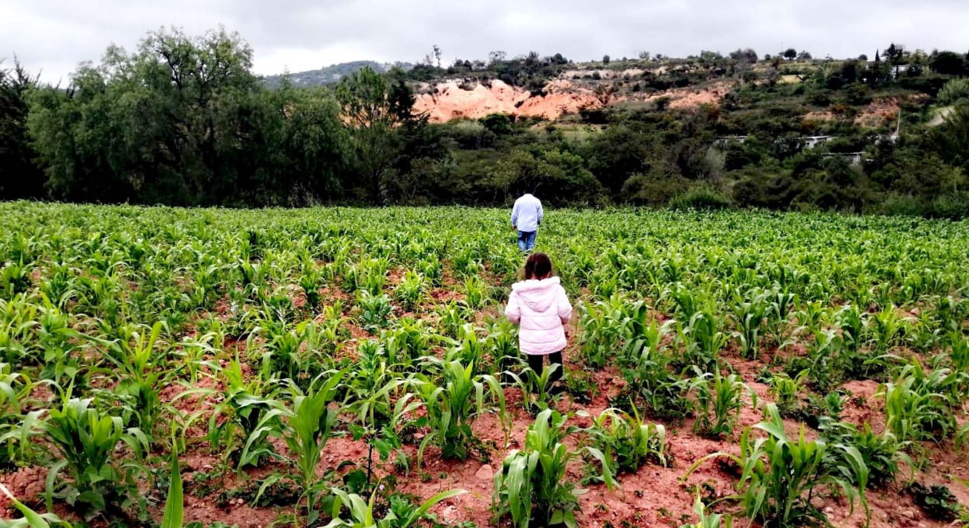 Some indigenous food systems are based on corn.